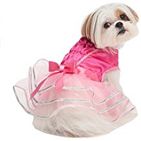 petfashion